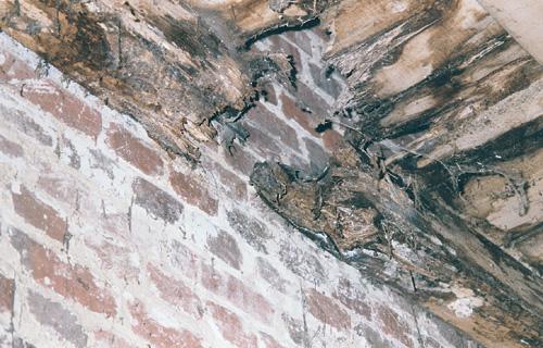 champignon mur top vue gnrale du mur de la dcouverte with champignon mur perfect coucher du. Black Bedroom Furniture Sets. Home Design Ideas